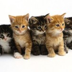 Cat Breeding Indoor Activity for Seniors