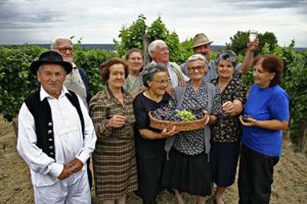 Elderly group grape gathering in Serbia