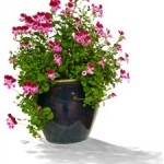 Indoor Gardening for Seniors