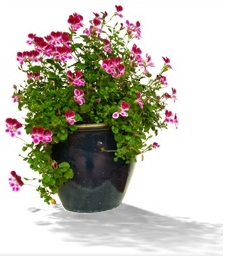 indoor gardening for seniors activities for seniors