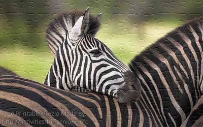 FREE Printable Jigsaw Puzzle: Zebra 1 (Small + Large Pieces). Very lovely looking zebra with its head on top of another one.