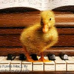 FREE Printable Jigsaw Puzzle: Baby Duck 1 (Small + Large Pieces). A furry and cute small baby duck standing on top of a piano.
