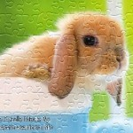 FREE Printable Jigsaw Puzzle: Baby Rabbit 1 (Small + Large Pieces)