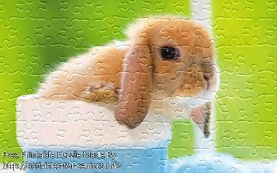 "FREE Printable Jigsaw Puzzle: Baby Rabbit 1 (Small + Large Pieces). A ""so cute one could die"" baby rabbit or baby bunny just all by himself close up with ears down."