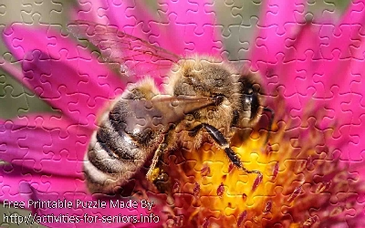 FREE Printable Jigsaw Puzzle: Bee 1 (Small + Large Pieces). A close up stunning photo of a bee on top of a flower in such detail that even the wing details are visible.