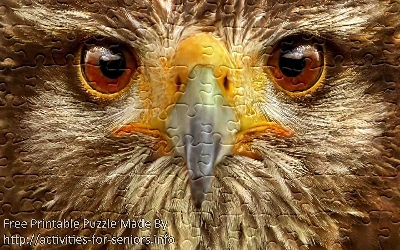 FREE Printable Jigsaw Puzzle: Eagle 1 (Small + Large Pieces). A very close up face view of a majestic eagle with all the details of its face and eyes in wonderful detail.