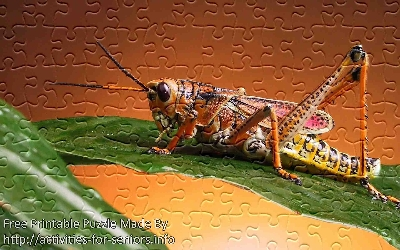 FREE Printable Jigsaw Puzzle: Grasshopper 1 (Small + Large Pieces). A really amazing and detailed grasshopper standing on a green leaf close up view.