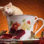 FREE Printable Jigsaw Puzzle: Hamster 2 (Small + Large Pieces)