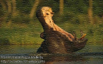 FREE Printable Jigsaw Puzzle: Hippo 1 (Small + Large Pieces). A great picture of a hippo who has his mouth wide open showing us an amazing sight.