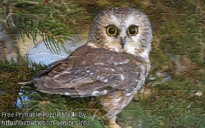 FREE Printable Jigsaw Puzzle: Owl 1 (Small + Large Pieces). A very interesting photo of an Owl looking directly at us with its enormous eyes.