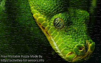FREE Printable Jigsaw Puzzle: Snake 1 (Small + Large Pieces). A really unbelievable picture of a green snake shot close up in full amazing detail especially its very unique eye.