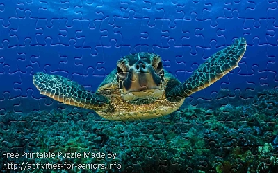 FREE Printable Jigsaw Puzzle: Turtle 1 (Small + Large Pieces). A very serious looking like turtle with big black eyes swimming towards us in the clear water.
