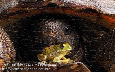 FREE Printable Jigsaw Puzzle: Turtle and frog 1 (Small + Large Pieces). A rather interesting and highly detailed picture of a green small frog in the forefront and a massive turtle in the background creating an fascinating contrast.
